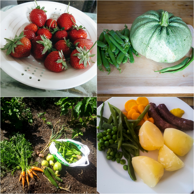 Allotmnt_July_Harvest