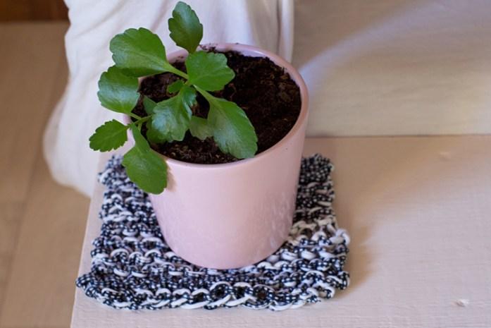 plante-deco-tricot