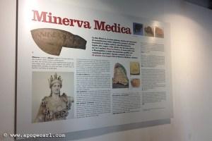 minerva medica 6