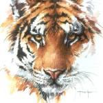 Nyírő Szabina – Tigris