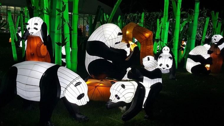 festival des lanternes gaillac pandas