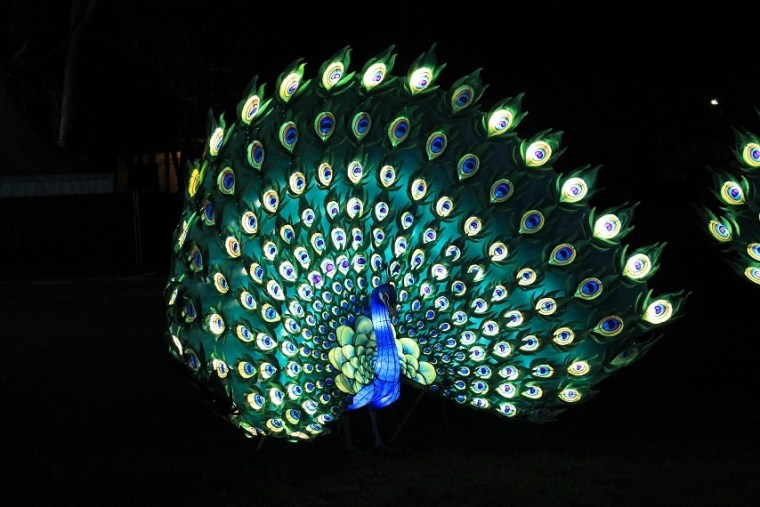 festival des lanternes gaillac paon