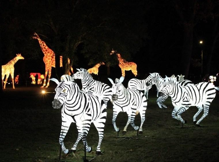 festival des lanternes gaillac zebres