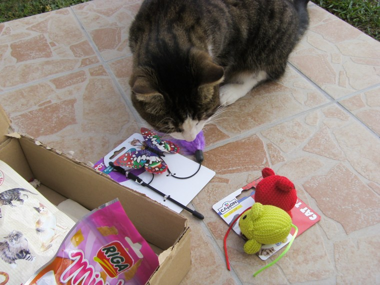 souris kittybox