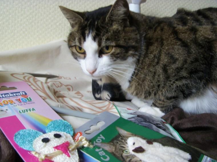 disney kittybox