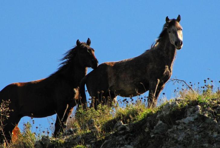 Ελεύθερα άλογα κάνουν την εμφάνισή τους στις Βασιλειές Ηρακλείου