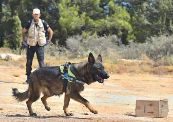 Δηλητηριασμένα δολώματα σκοτώνουν γεράκια και κυνηγόσκυλα