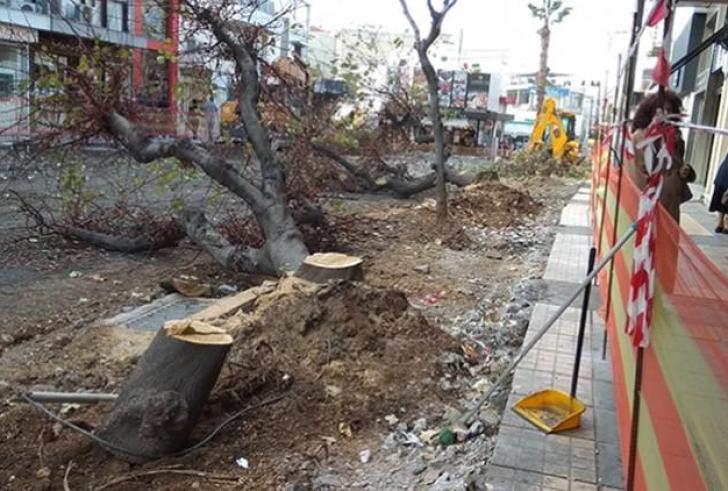 Ο Δήμος Ηρακλείου απαντά για τα κομμένα δέντρα στο κέντρο