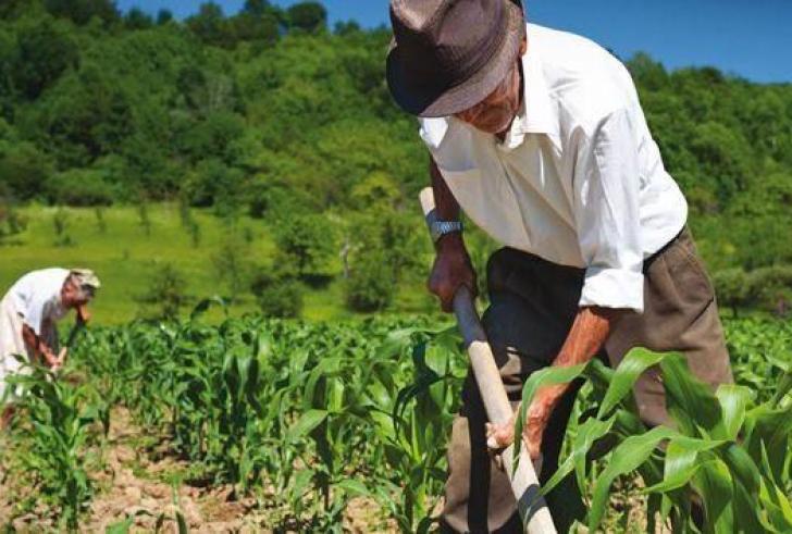 Από 1η Γενάρη στο 12% οι ασφαλιστικές εισφορές των αγροτών