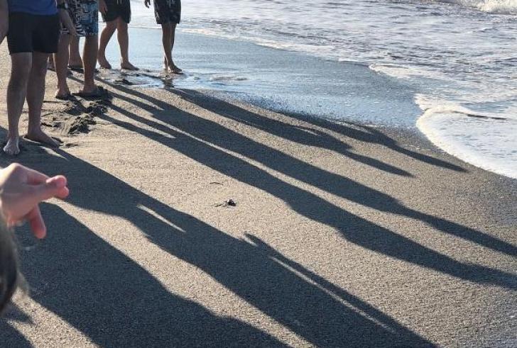 Δημόσιες εκσκαφές των φωλιών θαλάσσιων χελωνών στα Χανιά