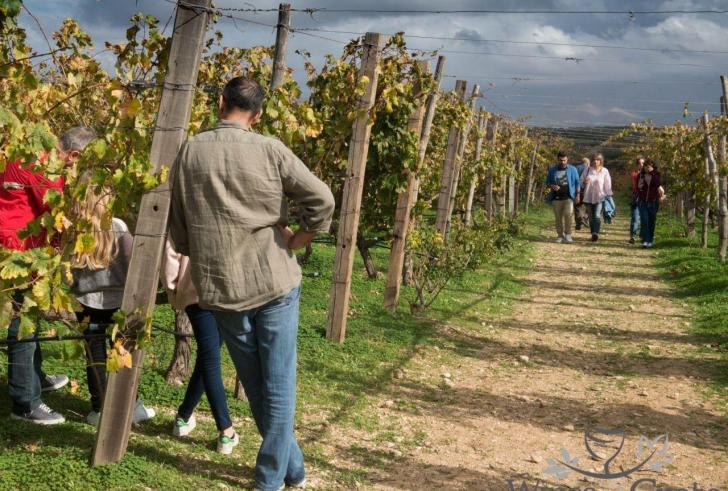 Απειλή για το κρασί η κλιματική αλλαγή