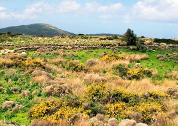 Οι χορτολιβαδικές εκτάσεις δεν μπορούν να χαρακτηρίζονται «δασικές»