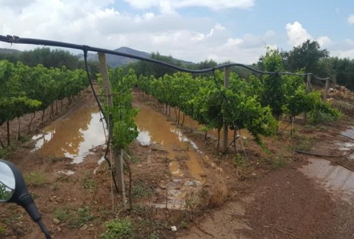 Ανακοίνωση του ΕΛΓΑ για τις βροχοπτώσεις που σημειώθηκαν χθες στην Κρήτη