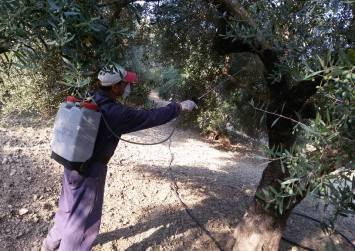 Ψεκασμοί για το Δάκο σε χωριά των Δήμων Φαιστού & Γόρτυνας