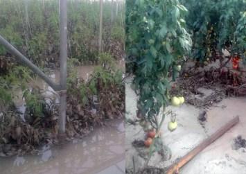 Καταστράφηκε θερμοκήπιο από τις πλημμύρες στην Κρήτη (φώτο)