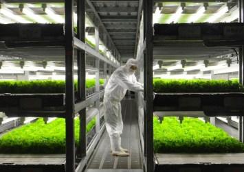 Μαρούλια «μεγαλώνουν»… χωρίς χώμα και χωρίς αγρότες!
