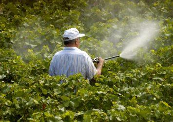 Καθυστέρηση στην εφαρμογή  της ορθής χρήσης των φυτοφαρμάκων