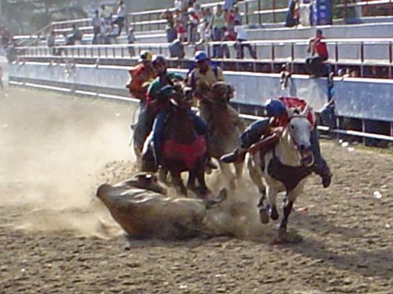 Maltrato a los animales con este deporte