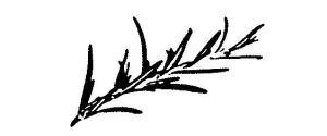 A Portuguese Affair logo