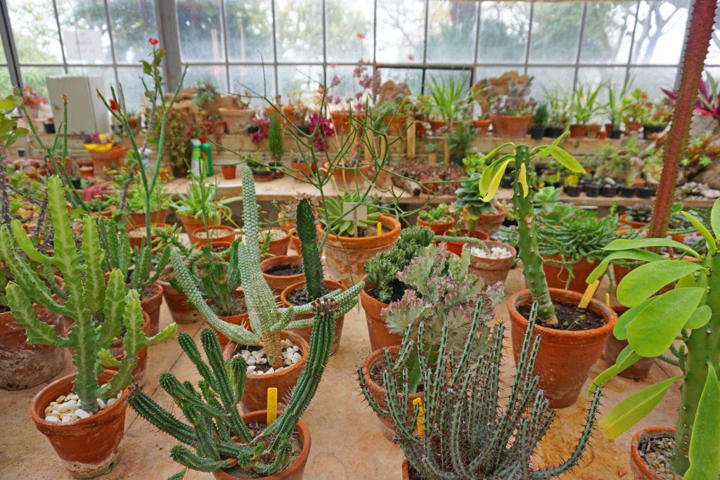 Greenhouse plants at the Jardim Botânico da Ajuda