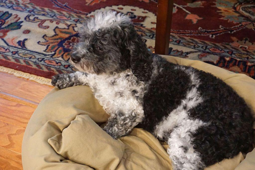 Maria Lawton's dog Gracie
