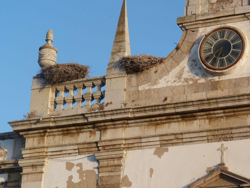 Faro nests
