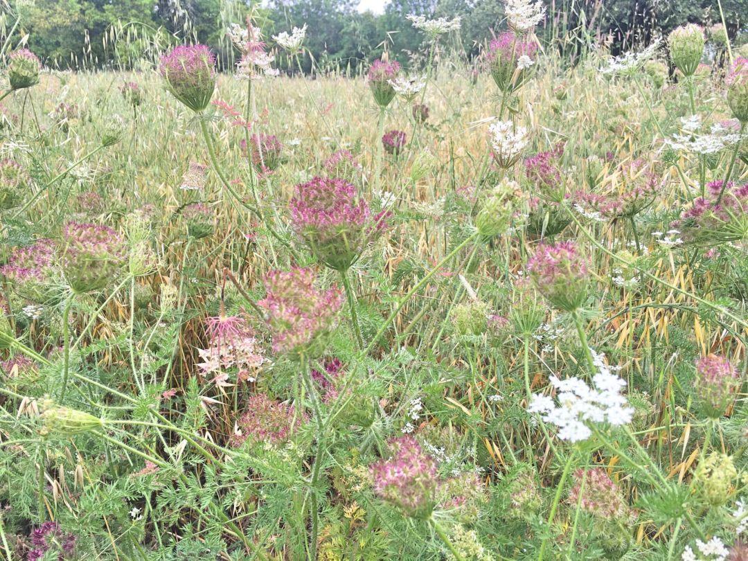 Parque de Monsanto - flowers