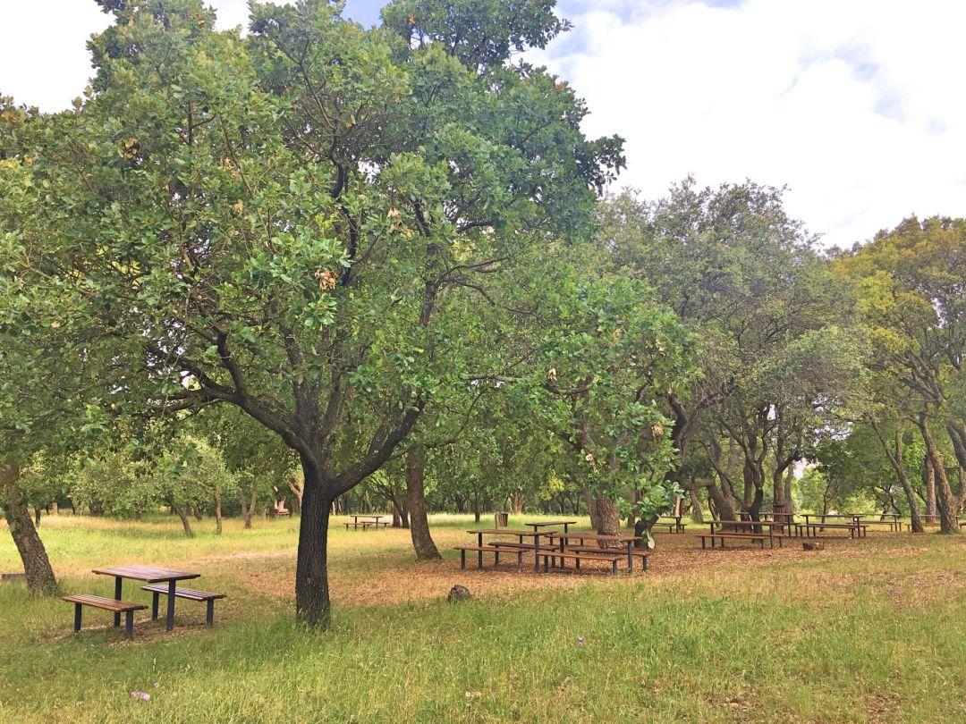 Parque de Monsanto - picnic