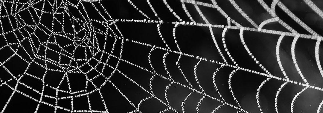 Recruter avec votre réseau et ses liens faibles