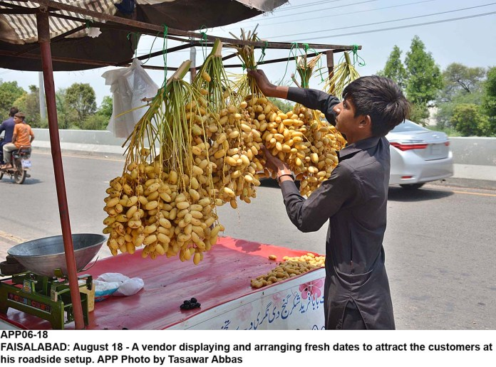 FAISALABAD: August 18 - A vendor displaying and arranging fresh dates to attract the customers at his roadside setup. APP Photo by Tasawar Abbas