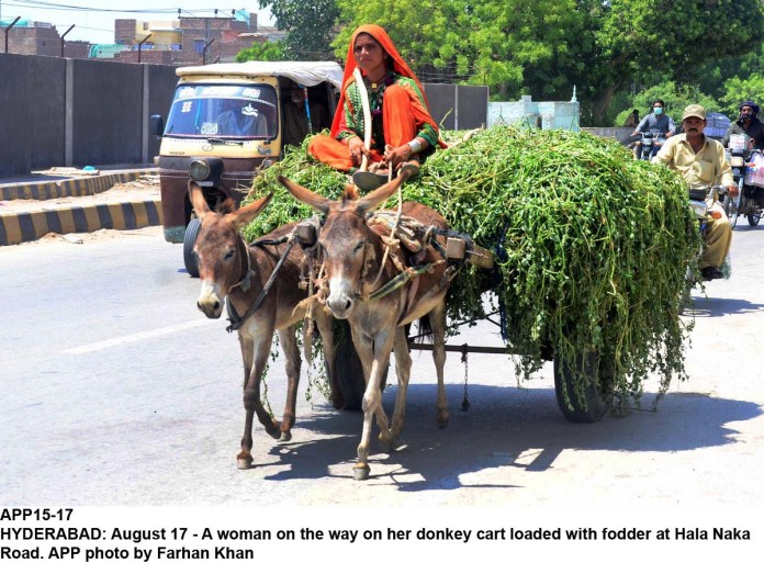 HYDERABAD: August 17 - A woman on the way on her donkey cart loaded with fodder at Hala Naka Road. APP photo by Farhan Khan