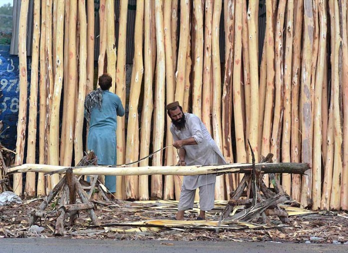 PESHAWAR: August 26 – Labourers busy in finishing popular tree wood to be used for construction work at Ring Road. APP Photo by Shaheryar Anjum