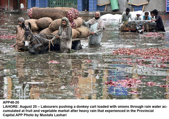 LAHORE: August 20 – Labourers pushing a donkey cart loaded with onions through rain water accumulated at fruit and vegetable market after heavy rain that experienced in the Provincial Capital.APP Photo by Mustafa Lashari