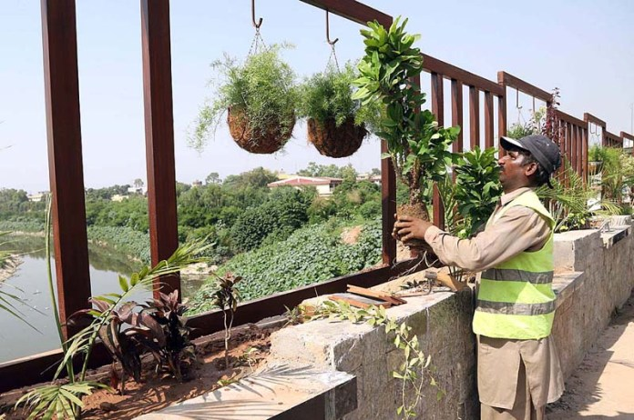 RAWALPINDI: September 16 - A PHA staffer installing different kinds of plants on the bridge during a beautification campaign at Moti Mahal area. APP photo by Abid Zia