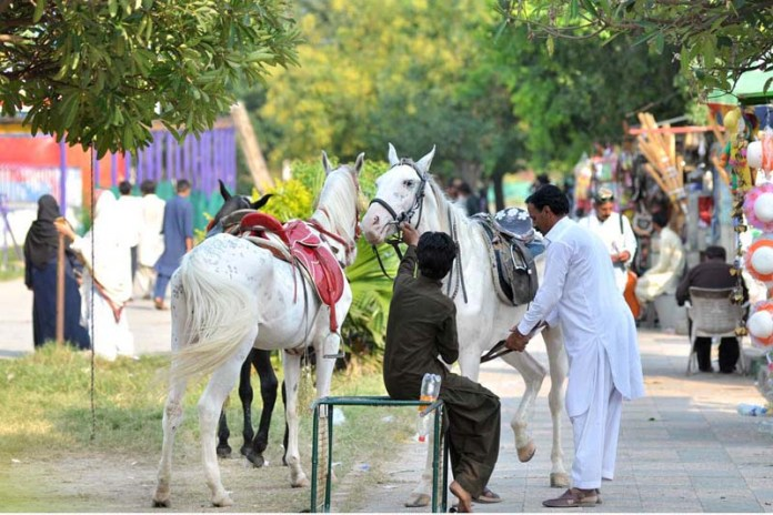 ISLAMABAD: September 13 - Vendors along with their horses waiting for the clients at Lake View park. APP photo by Irshad Sheikh