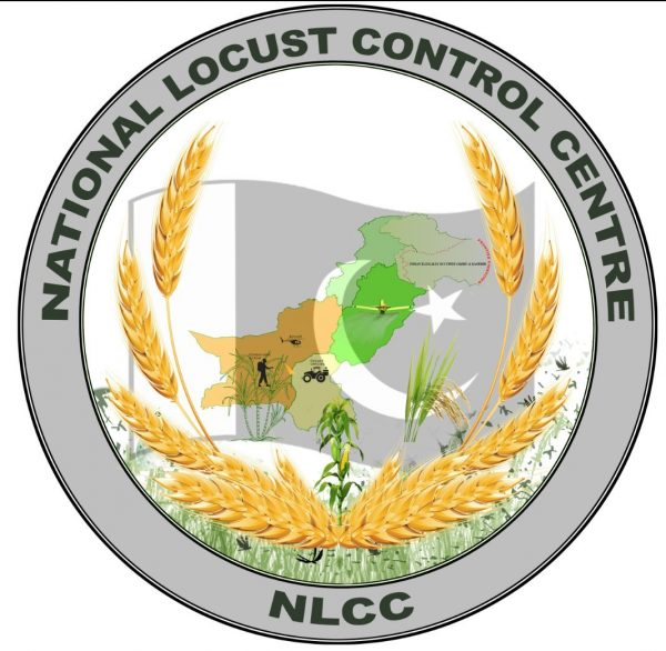 No locust in KP, Sindh and Punjab