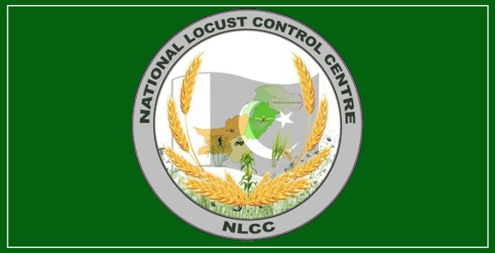No locust find in any part of country during 24 hours: NLCC