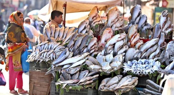 RAWALPINDI: October 22 – A vendor displaying fishes to attract the customers at his setup at Bani Chowk. APP photo by Abid Zia