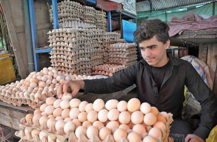 ISLAMABAD: October 16 – A vendor displaying and arranging eggs to attract the customers at his stall in weekly Jumma Bazaar. APP photo by Saeed-ul-Mulk