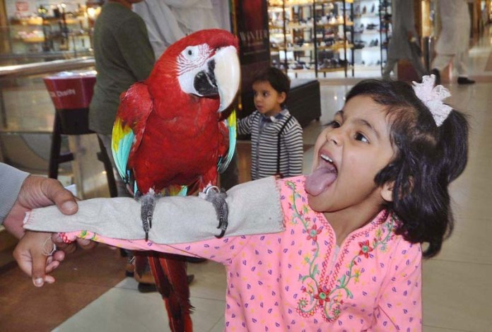 ISLAMABAD: October 29 – A minor girl is emotional to get a parrot on her arm during her visit to Centaurus Mall. APP photo by Irfan Mahmood
