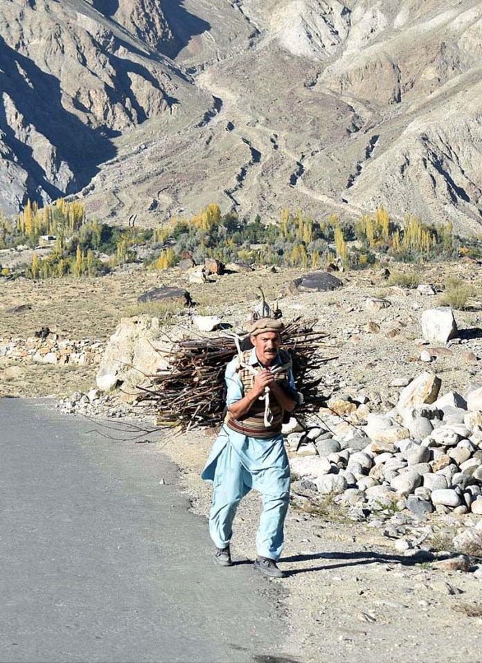 GHIZER: October 21 - A person on way back to home while carrying dry tree branches for domestic use. APP Photo by Ashraf Hussain