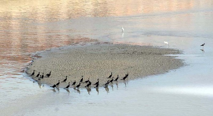 LARKANA: October 20 – A flock of birds sitting in the middle of Rice Canal. APP photo by Nadeem Akhtar
