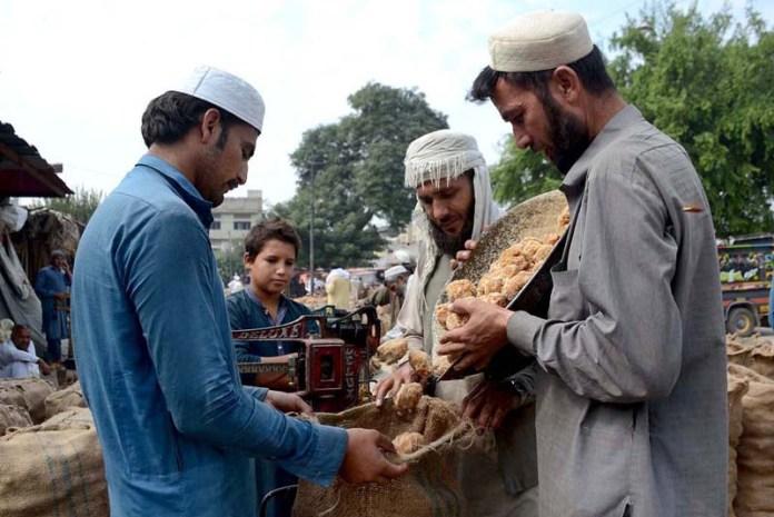 PESHAWAR: October 12 - Vendors busy in filling sacks of traditional sweet stuff Gur for selling purpose at Gur Mandi. APP Photo by Shaheryar Anjum