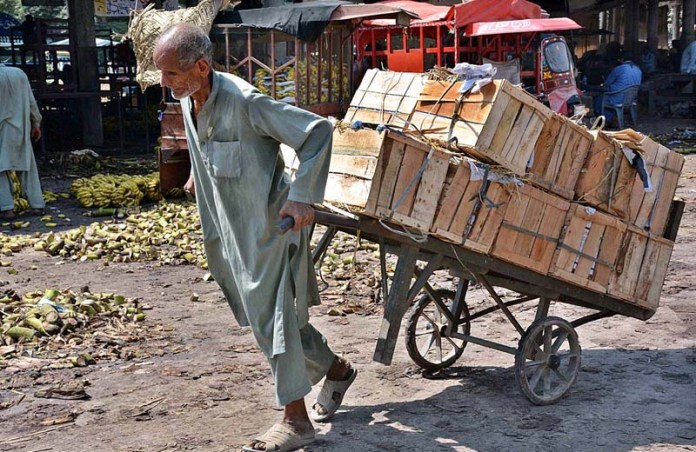 FAISALABAD: November 04 - An elderly person pulling handcart loaded with fruit boxes at Fruit & Vegetable Market. APP photo by Tasawar Abbas