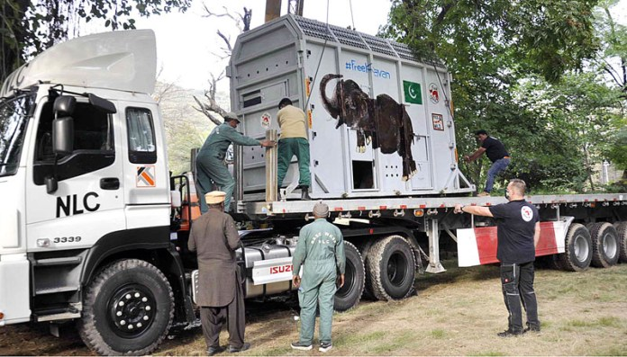 A view of Kavaan an Asian elephant of Muragzar Zoo in a cage loading on a delivery truck for shifting to airport for transportation to Cambodia