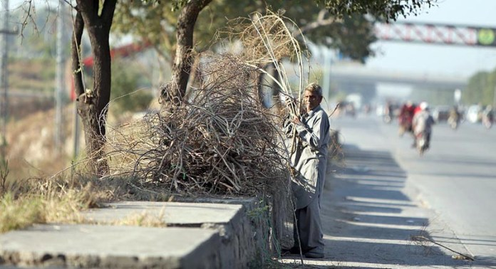 A person collecting dry tree branches from roadside greenbelt