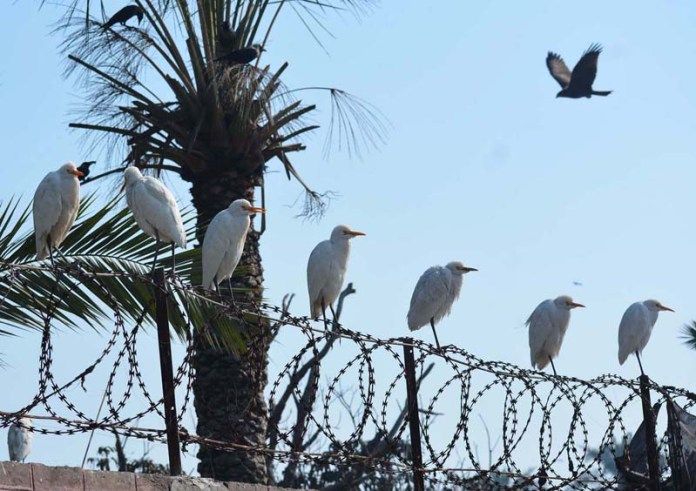 A group of birds sit on the wall of the Agricultural University to enjoying the sunlight