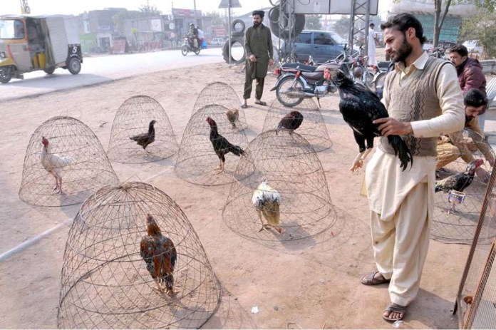 A vendor displayed country hens to attract the customers at road side