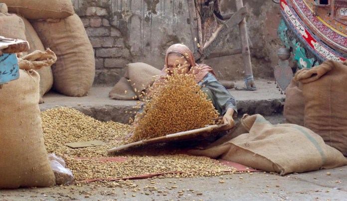 A women cleaning peanut to sell to customers at Ganj Mandi