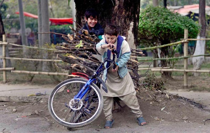 Two children struggling to balance cycle loaded with dry tree branches